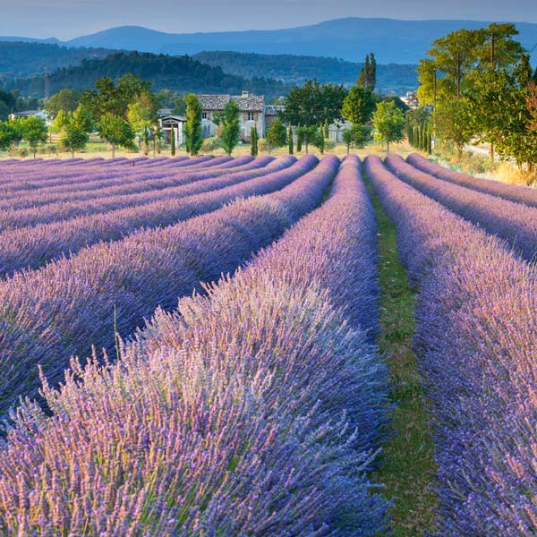 Learn French in Provence
