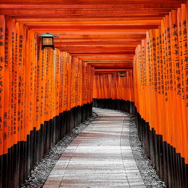 Japanese Courses in Kyoto Torii Gates